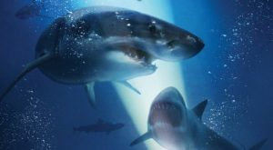 Win Advance Screening Passes to 47 METERS DOWN in Chicago