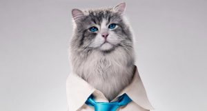 New Trailers For 'Nine Lives' Released